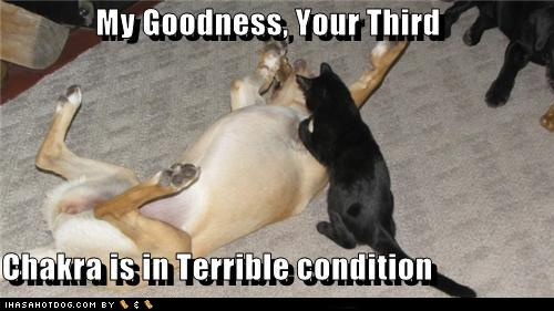 508b8_funny-dog-pictures-my-goodness-your-third-chakra-is-in-terrible-condition
